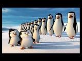 Пингвины из_Мадагаскара (2014(Русский язык)